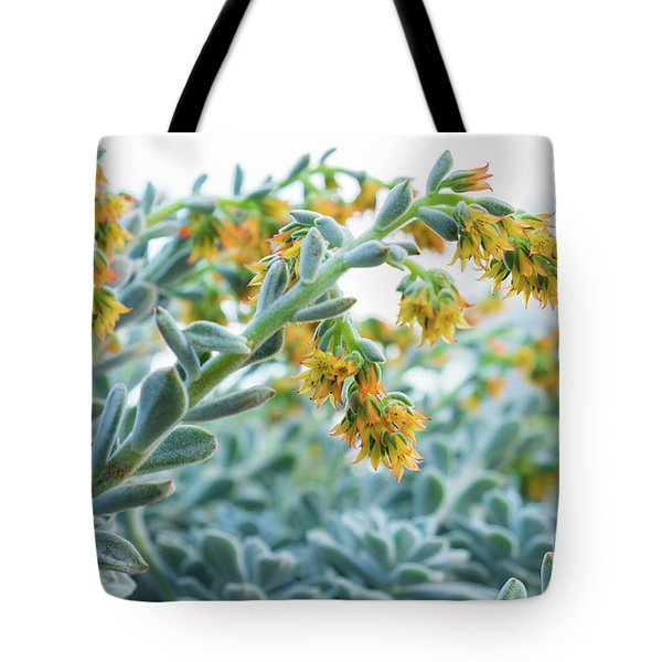 Mexican Echeveria In The  Morning Tote Bag