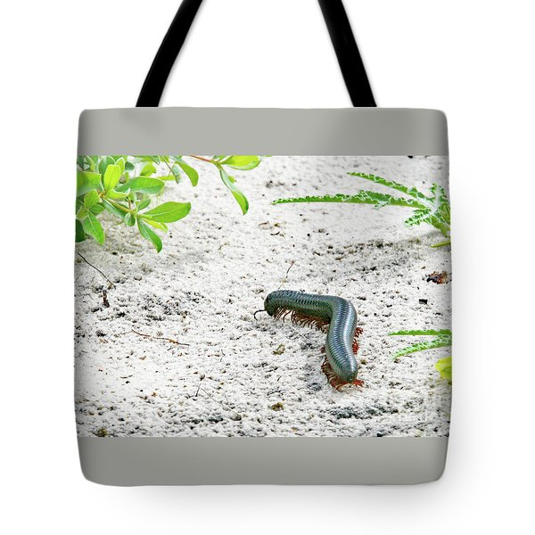 Tote Bag featuring the photograph Millipede-namibia by PJ Boylan