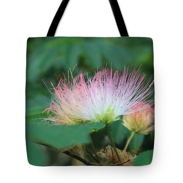 Mimosa Tree In Bloom Tote Bag