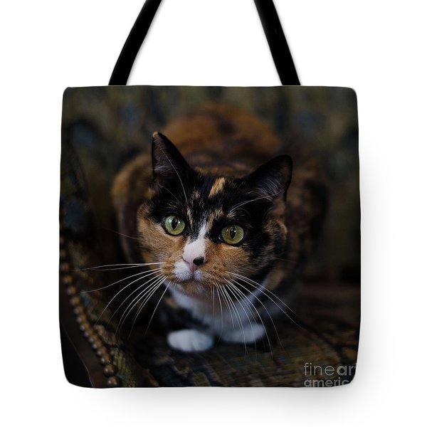 Tote Bag featuring the photograph Mischa by Irina ArchAngelSkaya