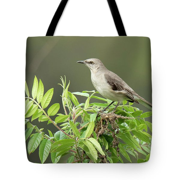 Tote Bag featuring the photograph Mockingbird by Michael D Miller