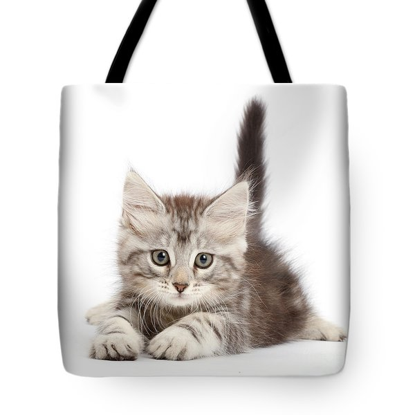 Tote Bag featuring the photograph Momentary Paws by Warren Photographic