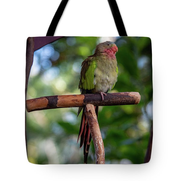 Tote Bag featuring the photograph Monty by Ross G Strachan