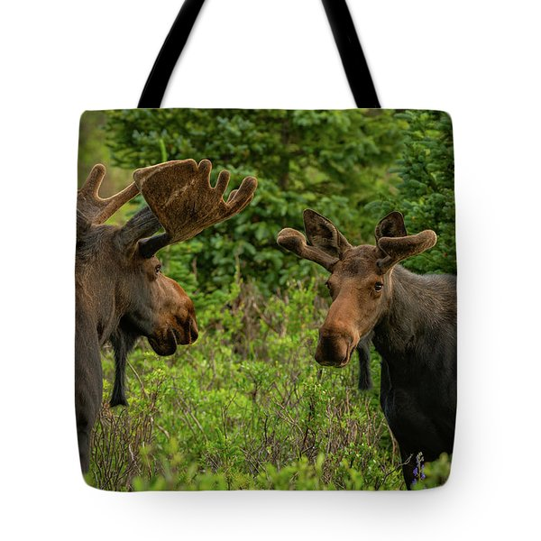 Moose Conversations Tote Bag