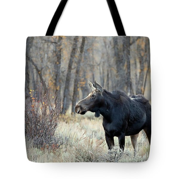 Moose Cow Study Tote Bag