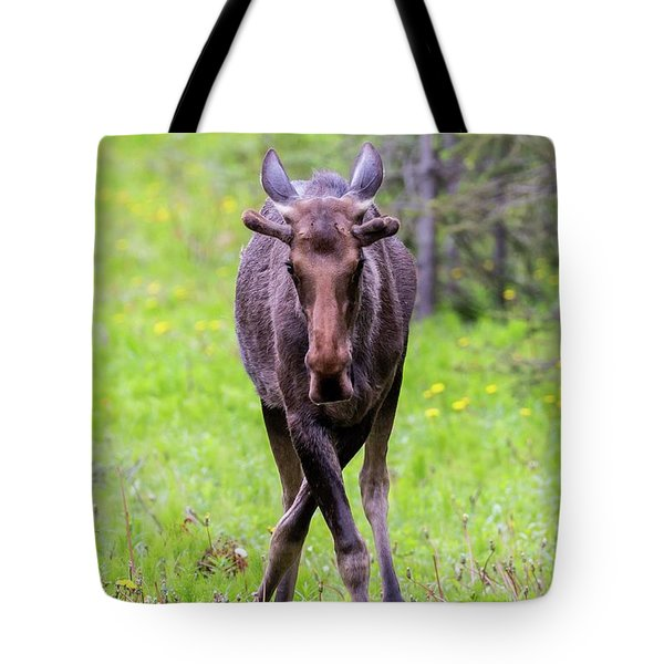 Tote Bag featuring the photograph Moose by Paul Schultz