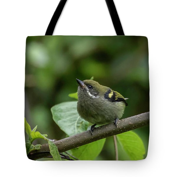 Tote Bag featuring the photograph Moustached Tinkerbird by Thomas Kallmeyer