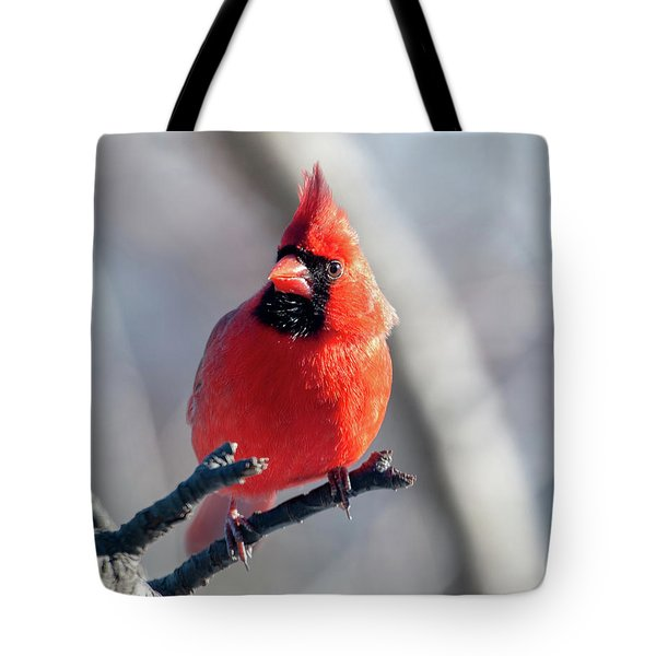 Mr. Handsome Cardinal Tote Bag
