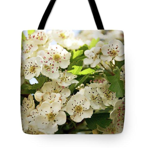 Neston.  Hawthorn Blossom. Tote Bag