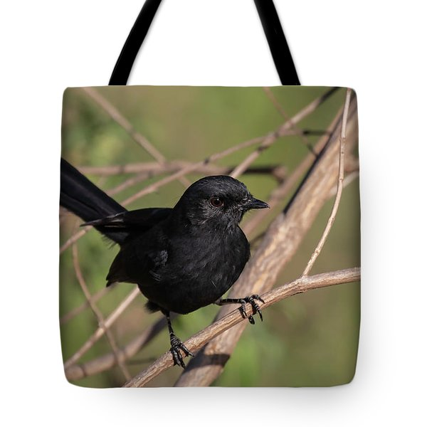 Tote Bag featuring the photograph Northern Black Flycatcher by Thomas Kallmeyer