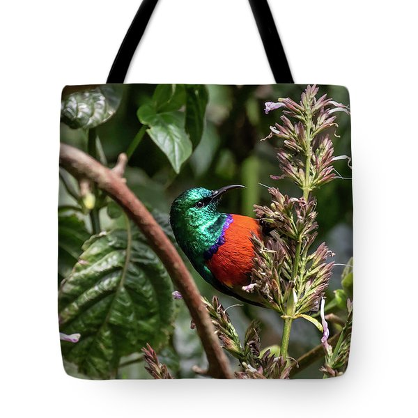 Tote Bag featuring the photograph Northern Double-collared Sunbird by Thomas Kallmeyer