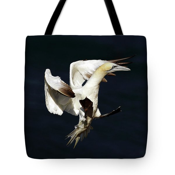 Northern Gannet - Square Crop Tote Bag