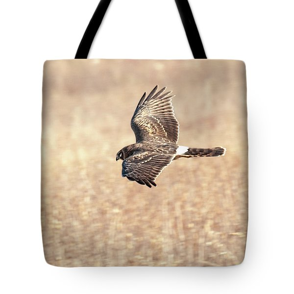 Northern Harrier The Hunt Tote Bag