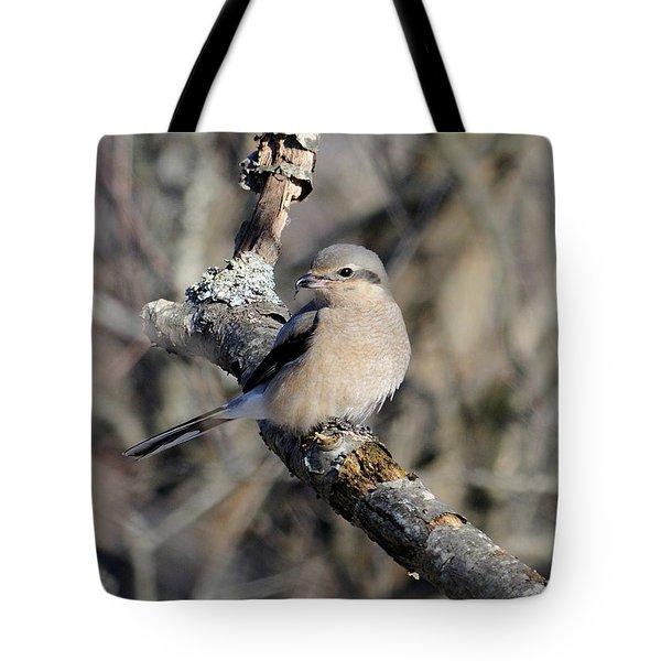 Northern Shrike Tote Bag