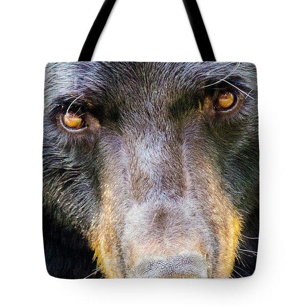 Nosy Bear Tote Bag