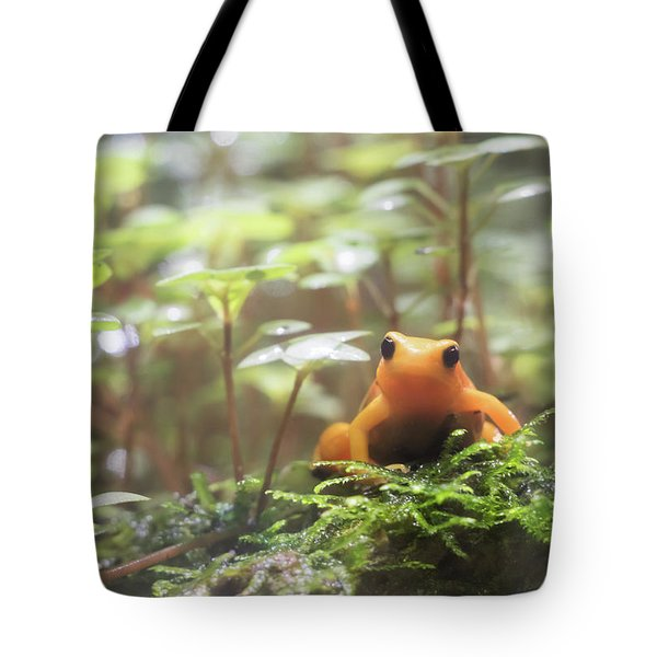 Tote Bag featuring the photograph Orange Frog. by Anjo Ten Kate