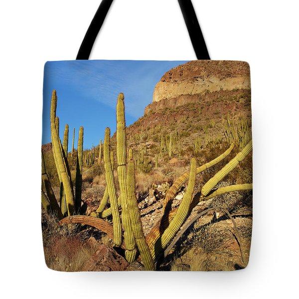 Organ Pipe Cactus, Ajo Mts, Organ Pipe Tote Bag