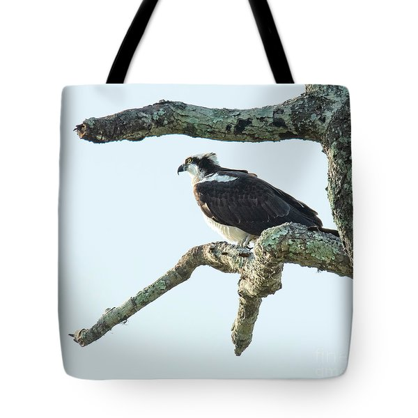 Tote Bag featuring the photograph Osprey On Perch by Michael D Miller