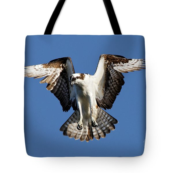 Tote Bag featuring the photograph Osprey by Sue Harper