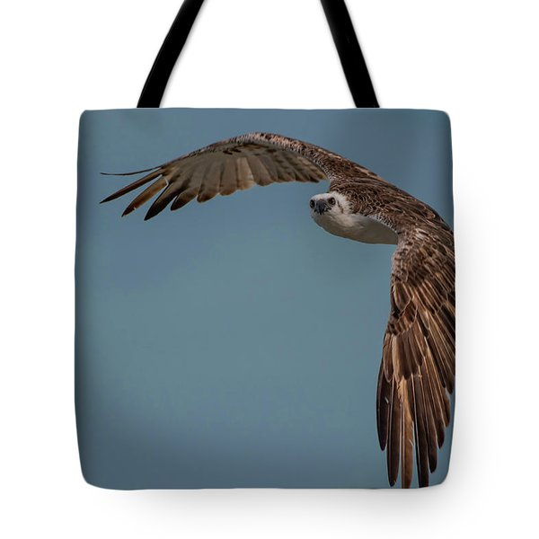 Tote Bag featuring the photograph Osprey by Thomas Kallmeyer