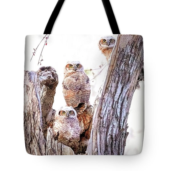Owl Trio Standing Guard Tote Bag