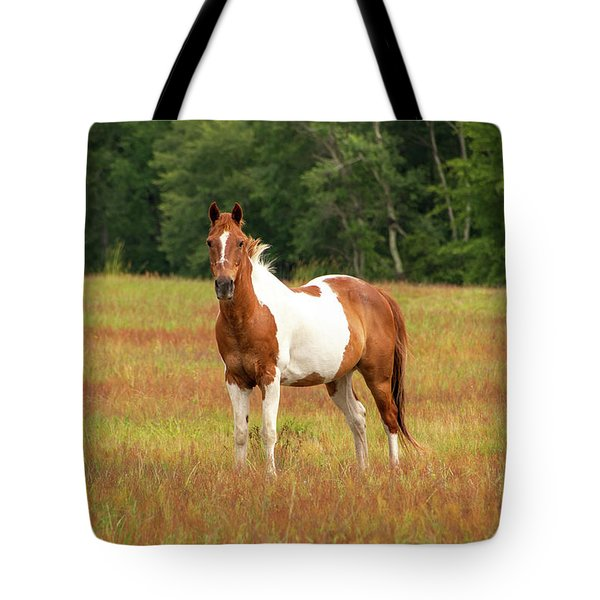Paint Horse In Pasture Tote Bag