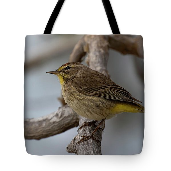Tote Bag featuring the photograph Palm Warbler by Thomas Kallmeyer