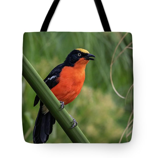 Tote Bag featuring the photograph Papyrus Gonolek by Thomas Kallmeyer