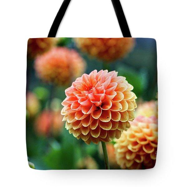Peach Dahlias Tote Bag