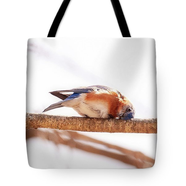 Peek-a-boo Blue Bird Tote Bag
