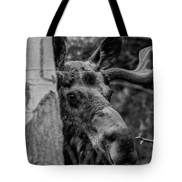 Peek-a-moose Tote Bag