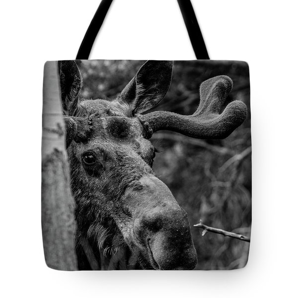 Peek-a-moose Tote Bag