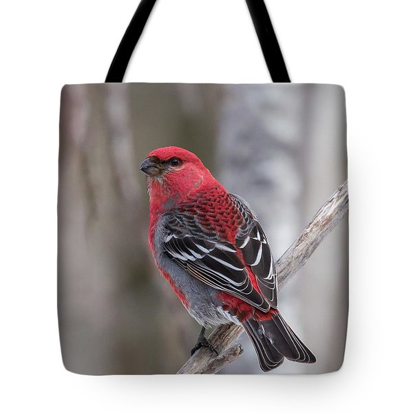 Pine Grosbeak Sax Zim Bog Tote Bag