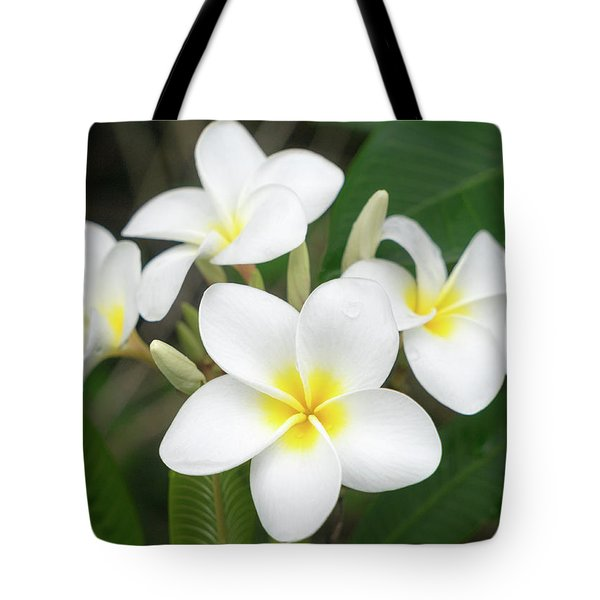 Pleasing Plumeria Tote Bag