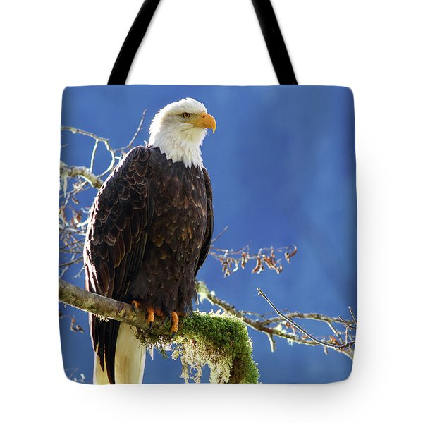 Portrait Of A Backlit Bald Eagle In Squamish Tote Bag
