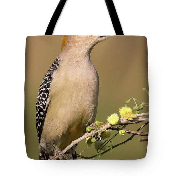 Portrait Of A Golden-fronted Woodpecker Tote Bag