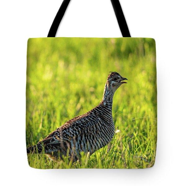 Prairie Chicken Hen Tote Bag
