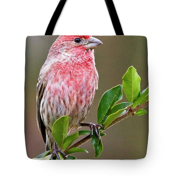 Purple Finch Tote Bag