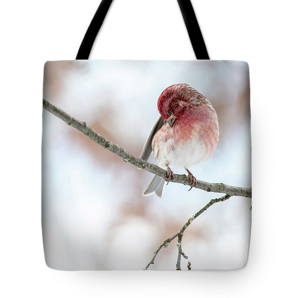 Purple Finch Preening Tote Bag