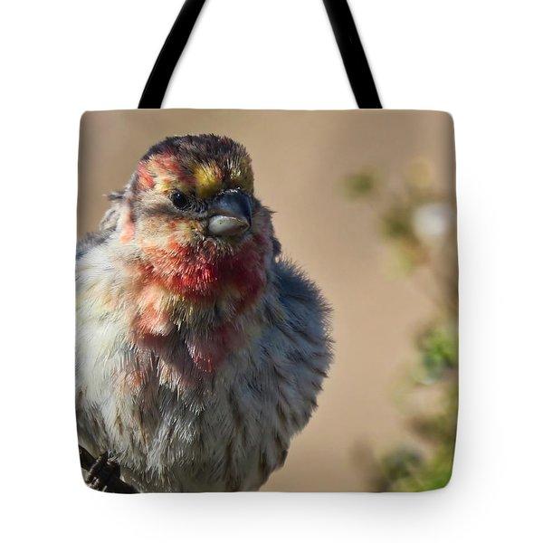 Rare Multicolored Male House Finch Tote Bag