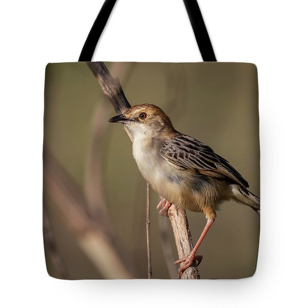 Tote Bag featuring the photograph Rattling Cisticola by Thomas Kallmeyer