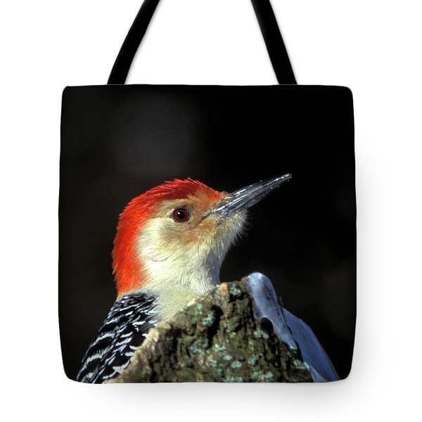 Tote Bag featuring the photograph Red Bellied Woodpecker by Jeff Phillippi