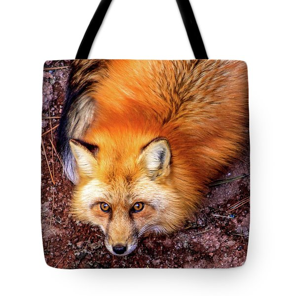 Tote Bag featuring the photograph Red Fox In Canyon, Arizona by Dawn Richards
