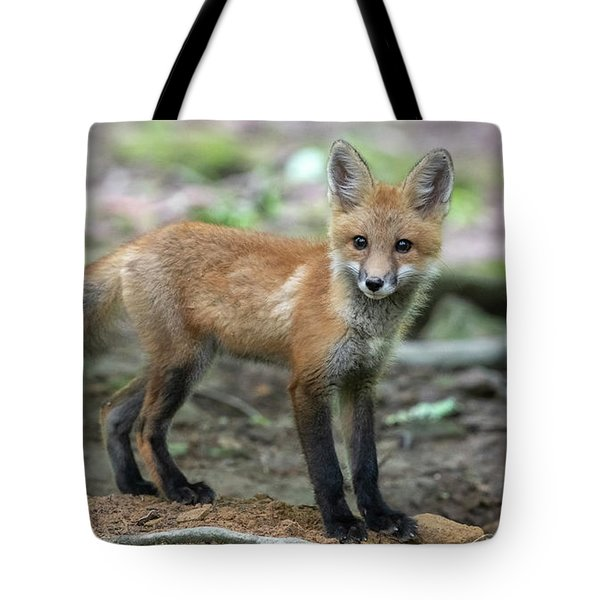 Red Fox In Nature Tote Bag