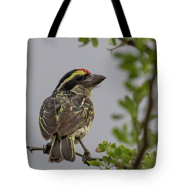Tote Bag featuring the photograph Red-fronted Barbet by Thomas Kallmeyer