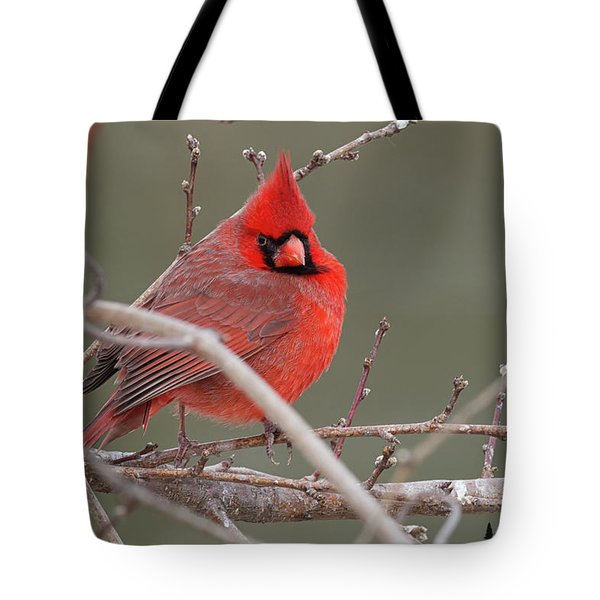 Red In Winter Tote Bag
