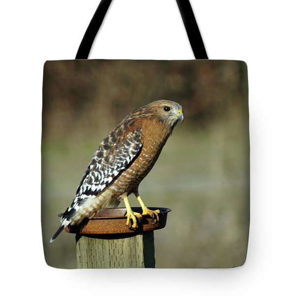 Tote Bag featuring the photograph Red-shouldered Hawk by Ben Upham III