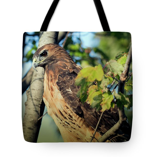 Red-tailed Hawk Looking Down From Tree Tote Bag