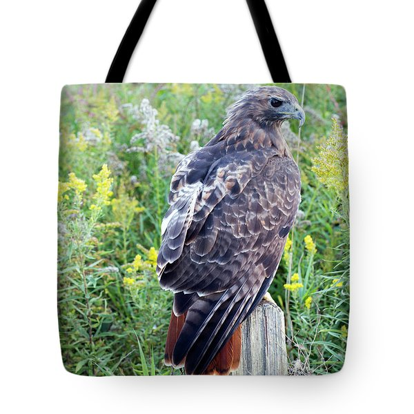 Red-tailed Hawk On Fence Post Tote Bag