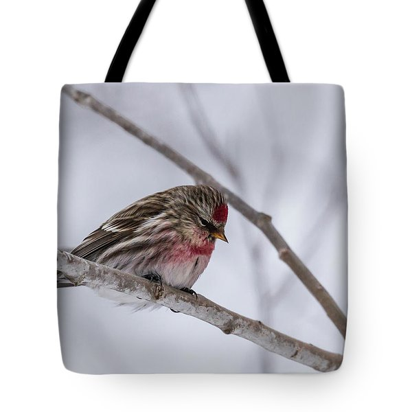 Tote Bag featuring the photograph Redpoll Sax Zim Bog by Paul Schultz